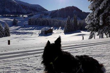 Winterwandern und Langlaufen auf der Postalm